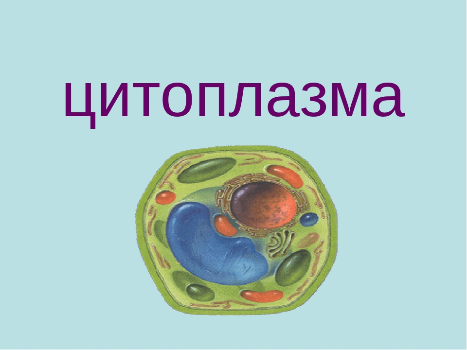 Картинки цитоплазма клетки