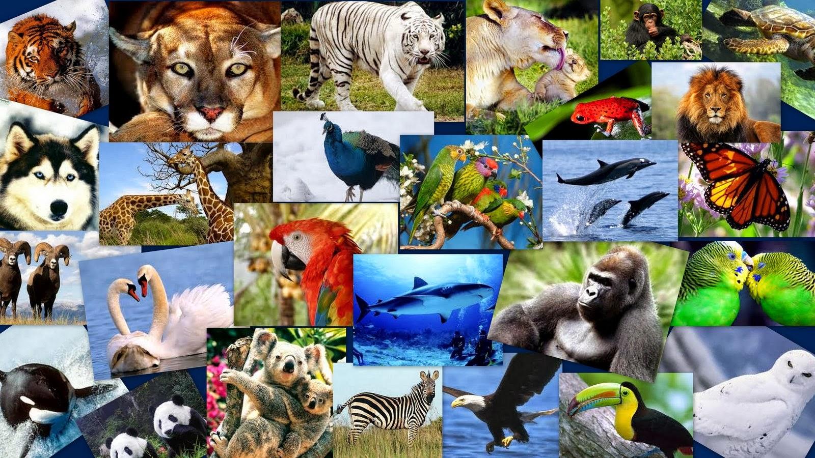 Картинка коллаж животные