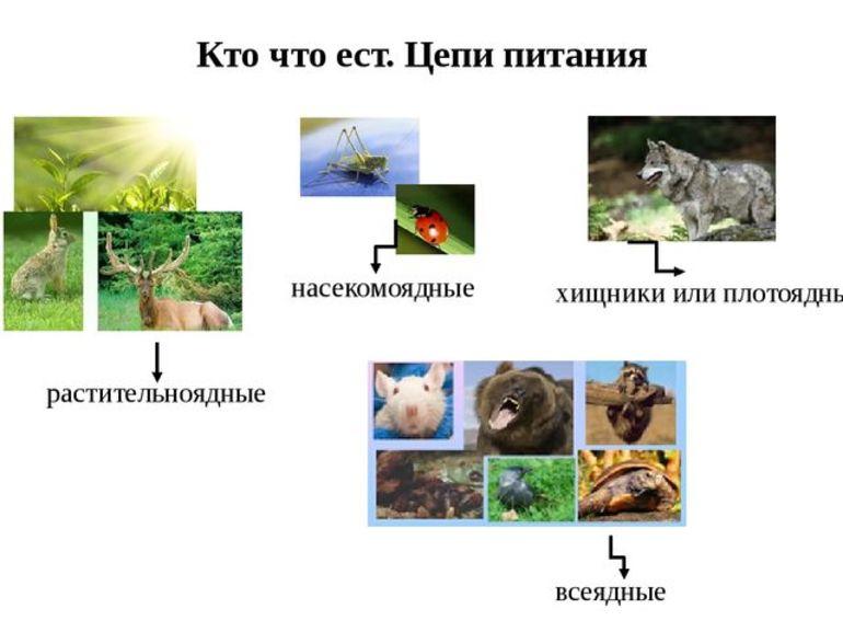 Цепи питания животных