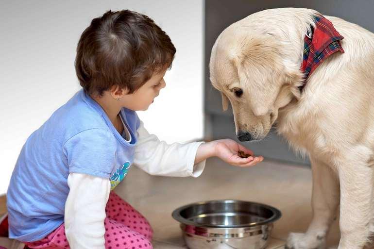 Приучая ребенка заботиться о питомце