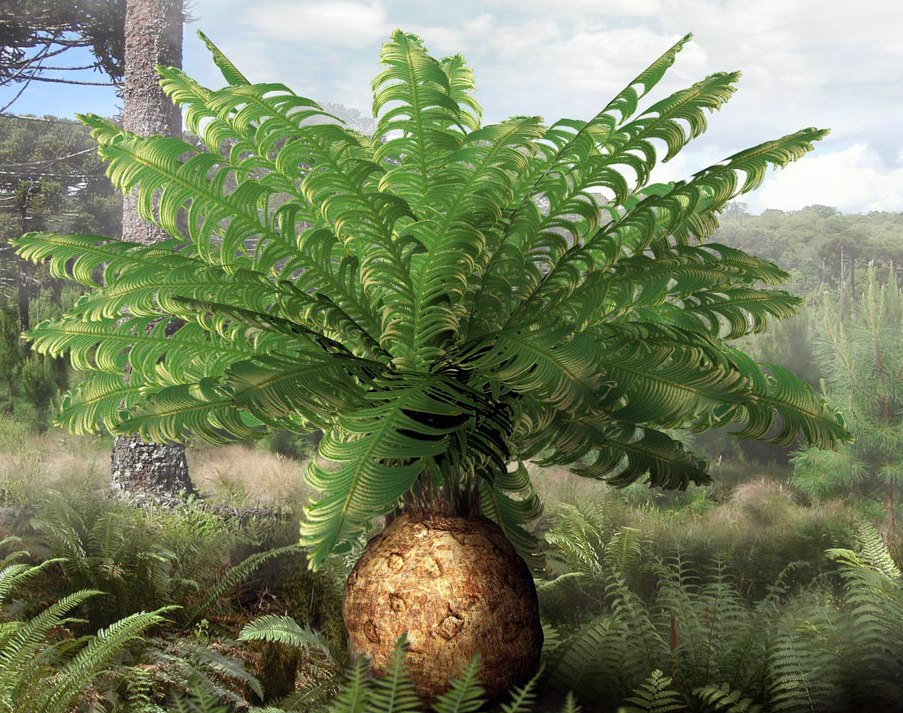 Картинки растений юрского периода