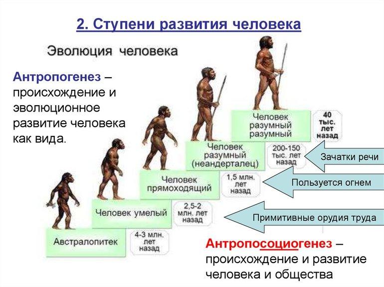 Этапы развития человечества