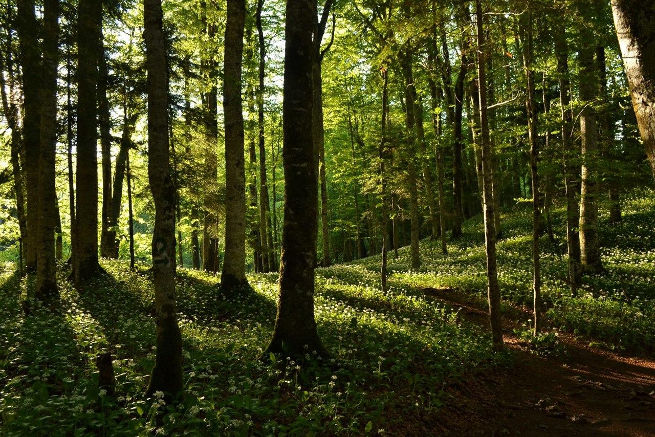 удалось картинки лесного сообщества шкафов используются