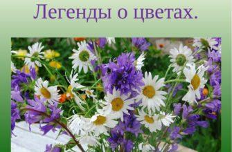 Легенда о растении