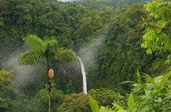 географическое положение влажных экваториальных лесов