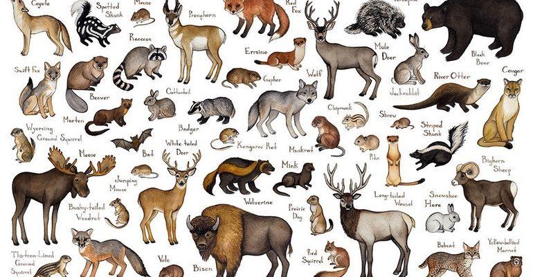 Млекопитающие характеристика
