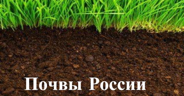 Почвы россии географическое положение