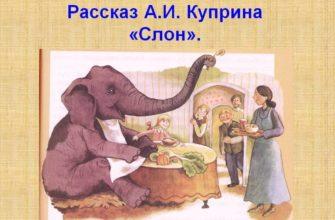 Рассказ Куприна «Слон»