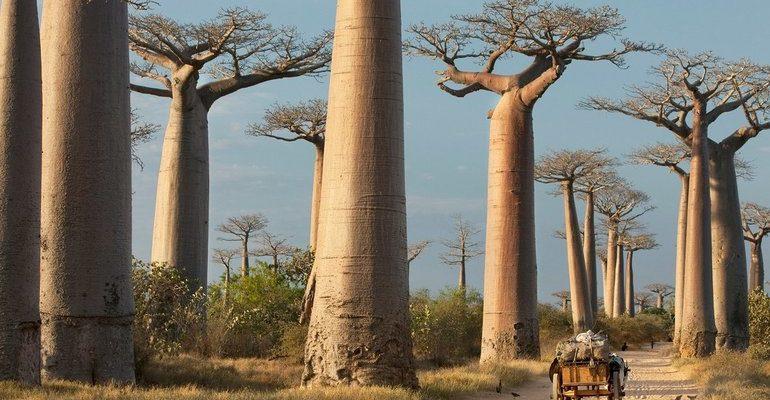 Растения африки