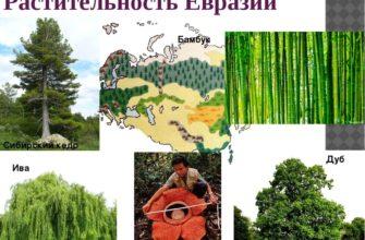 Растения Евразии