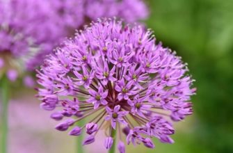 Соцветие растений