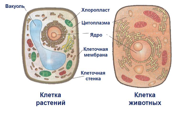 Термины и определения по биологии 5 класс