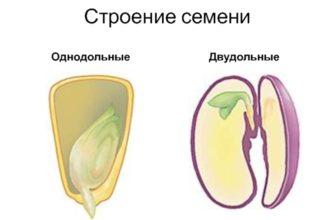 Строение семени, цветка и плода однодольных и двудольных растений