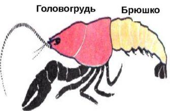 Тело членистоногих состоит из