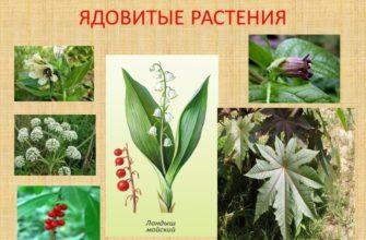 «Ядовитые растения»