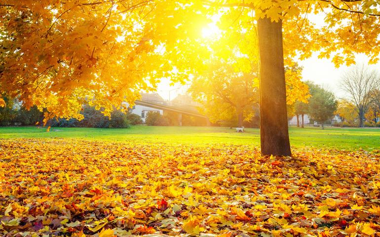 Сочинение на тему «Золотая осень» (4 класс): печаль и ...