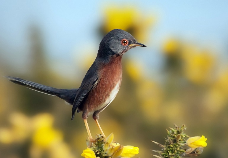 Викторина про птиц