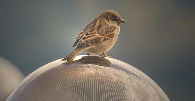Анализ стихотворения пушкина птичка