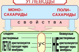 В биологии углеводы