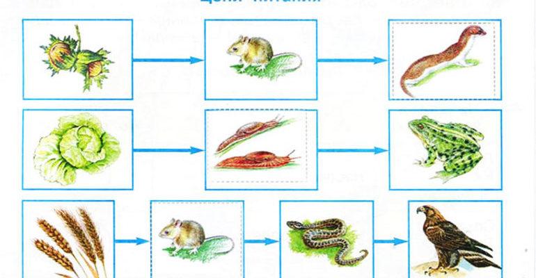 Цепи питания животных 3 класс окружающий мир