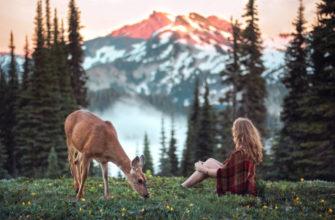 Как человек и природа связаны между собой