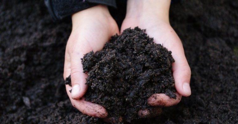 Черноземные почвы