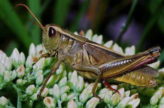 Членистоногие насекомые
