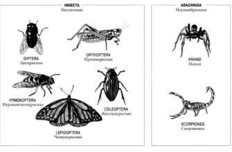 Чем членистоногие отличаются от других беспозвоночных