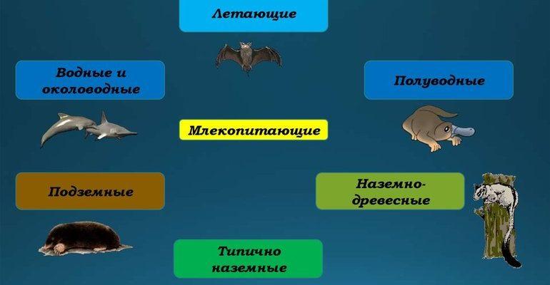 Экологические группы млекопитающих