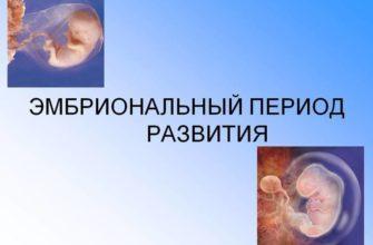 Эмбриональный период развития