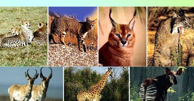 Характерные особенности и примеры плацентарных млекопитающих
