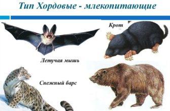 Хордовые животные