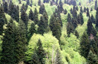 Хвойно-лиственные леса