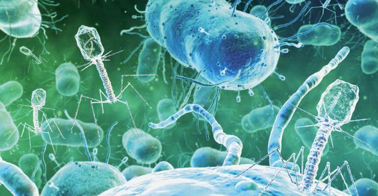 Класс неклеточных форм жизни — вирусы и бактериофаги
