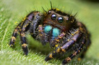 Класс паукообразные общая характеристика