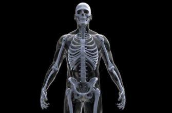 Кости отделов скелета человека