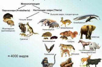Млекопитающие
