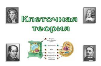 Основные положения клеточной теории значение (биология 9 класс)