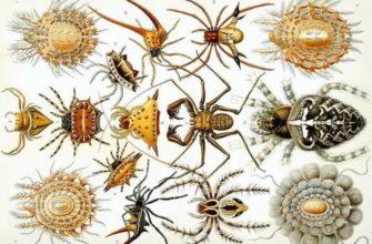 Отличительные признаки паукообразных