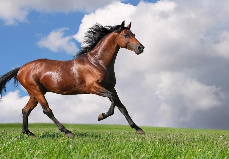 Стихи о лошадях