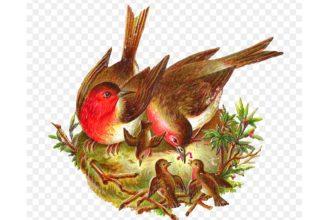 Пословицы про птиц