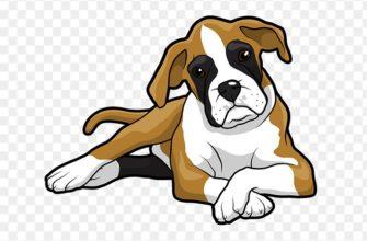 Пословицы про собак
