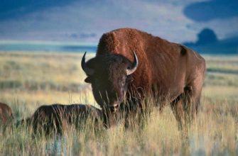 Представители животного мира Северной Америки