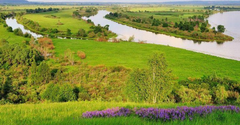 Природные зоны республики татарстан