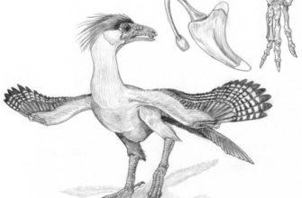 Происхождение птиц