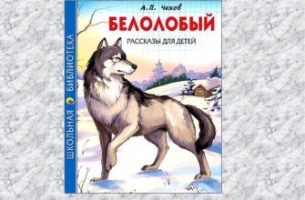 Рассказа «Белолобый» Антона Чехова