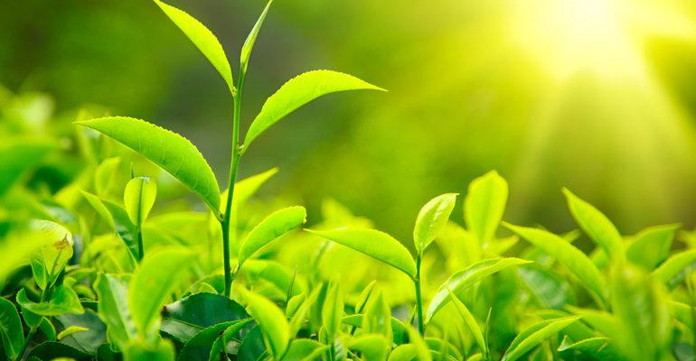 Растения (окружающий мир 3 класс)