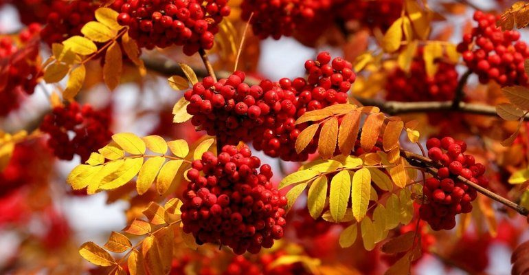 Растения осенью (окружающий мир 1 класс)