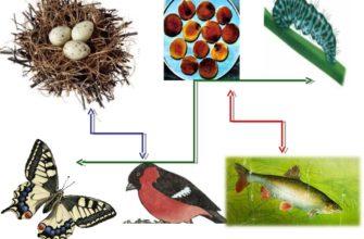 «Размножение и развитие животных»