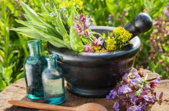 Сообщение о лекарственных растениях